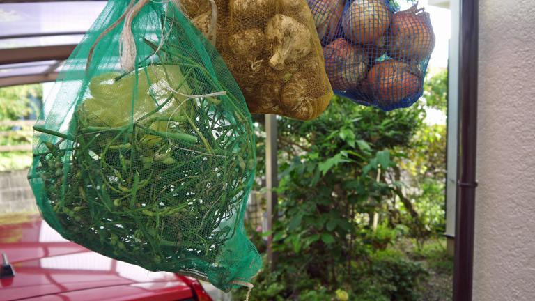 鎌倉ダイコンの種採取、今年は辛味ソバに使いたい6・19_c0014967_22491817.jpg