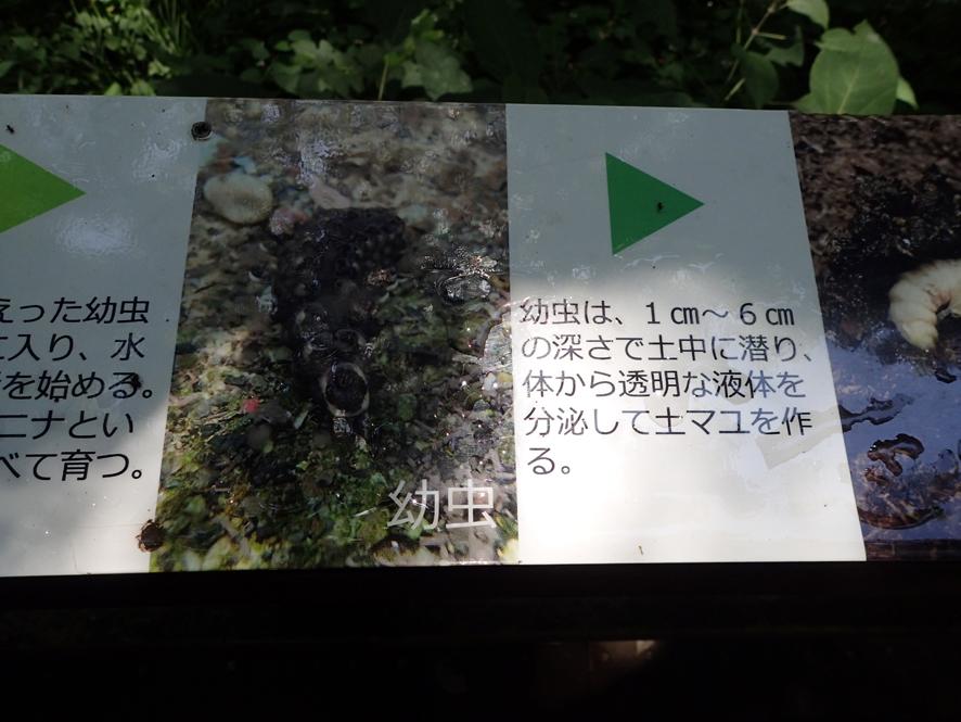 f0131669_07291685.jpg