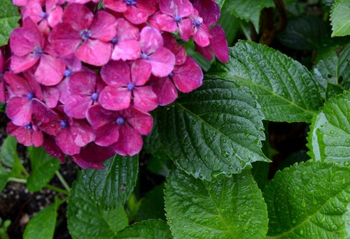 雨の日にはジャズを聴く (4) ~ 別れはいつも雨に ~_b0102572_14343075.jpg