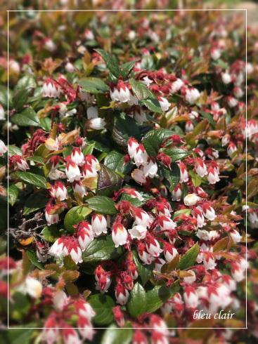 可愛い花々_b0270372_17233625.jpg