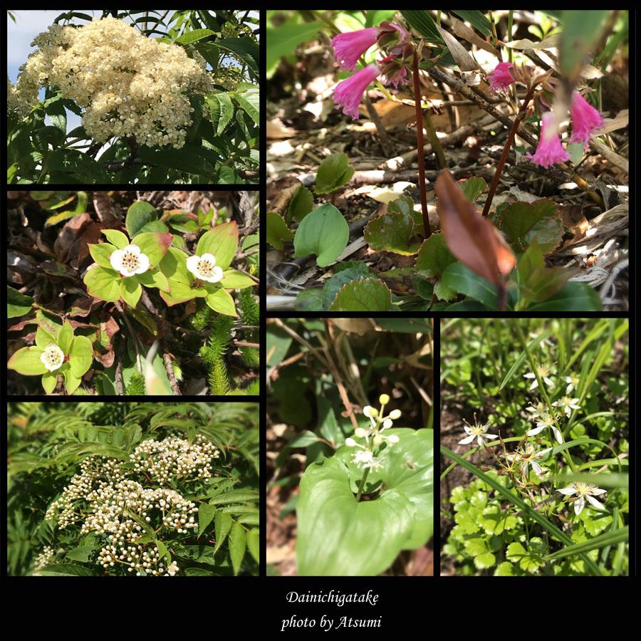 可愛い花々_b0270372_17325626.jpg