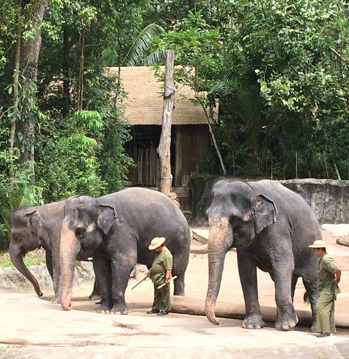 子連れシンガポール旅行2日目 動物園とカトンとガーデンズ編_f0167281_11181199.jpg