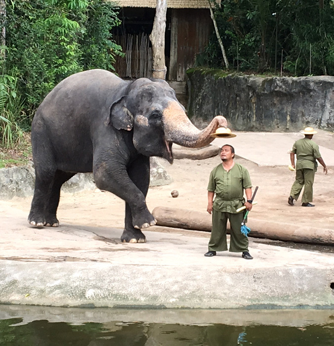 子連れシンガポール旅行2日目 動物園とカトンとガーデンズ編_f0167281_11181948.jpg