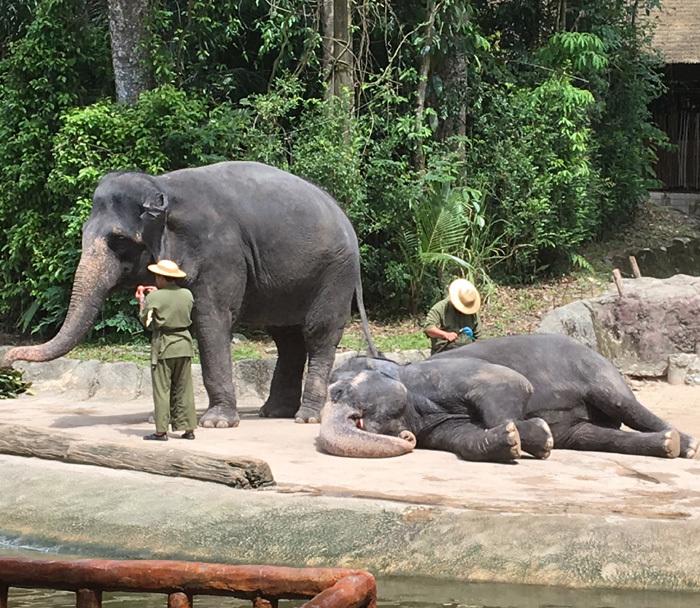子連れシンガポール旅行2日目 動物園とカトンとガーデンズ編_f0167281_11183189.jpg