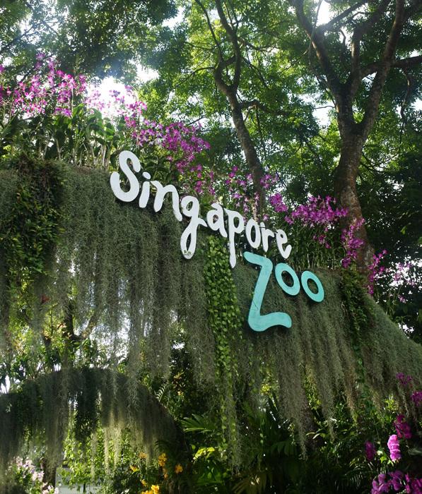 子連れシンガポール旅行2日目 動物園とカトンとガーデンズ編_f0167281_11372666.jpg