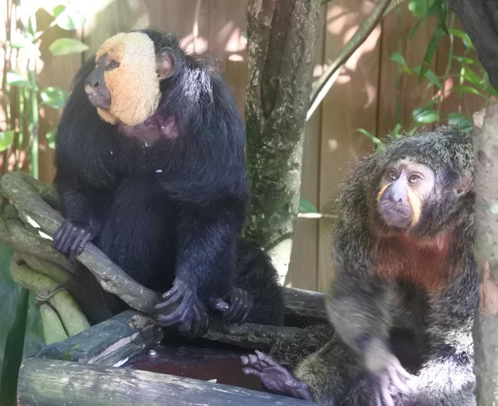 子連れシンガポール旅行2日目 動物園とカトンとガーデンズ編_f0167281_11374208.jpg