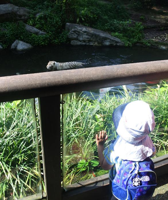 子連れシンガポール旅行2日目 動物園とカトンとガーデンズ編_f0167281_11380010.jpg