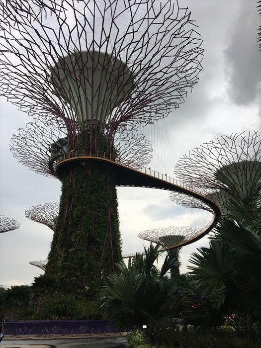 子連れシンガポール旅行2日目 動物園とカトンとガーデンズ編_f0167281_12312623.jpg
