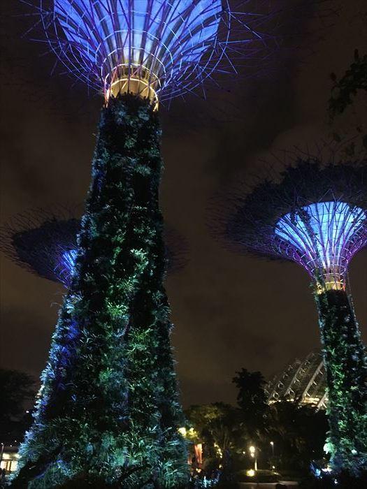 子連れシンガポール旅行2日目 動物園とカトンとガーデンズ編_f0167281_12332818.jpg