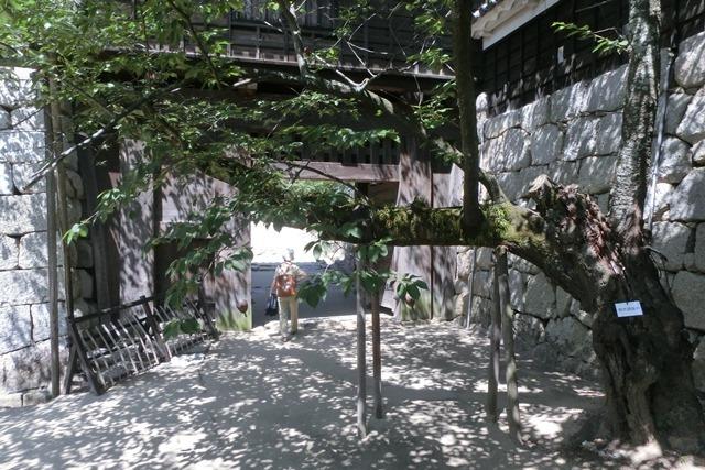 名城松山城を訪ねる旅、坊ちゃん列車路面電車の行き交う楽しい町松山・・・道後温泉と松山城、名君加藤義明_d0181492_16361367.jpg