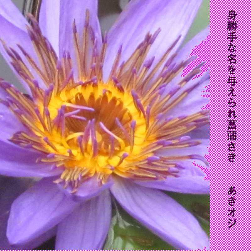 f0117041_06070163.jpg