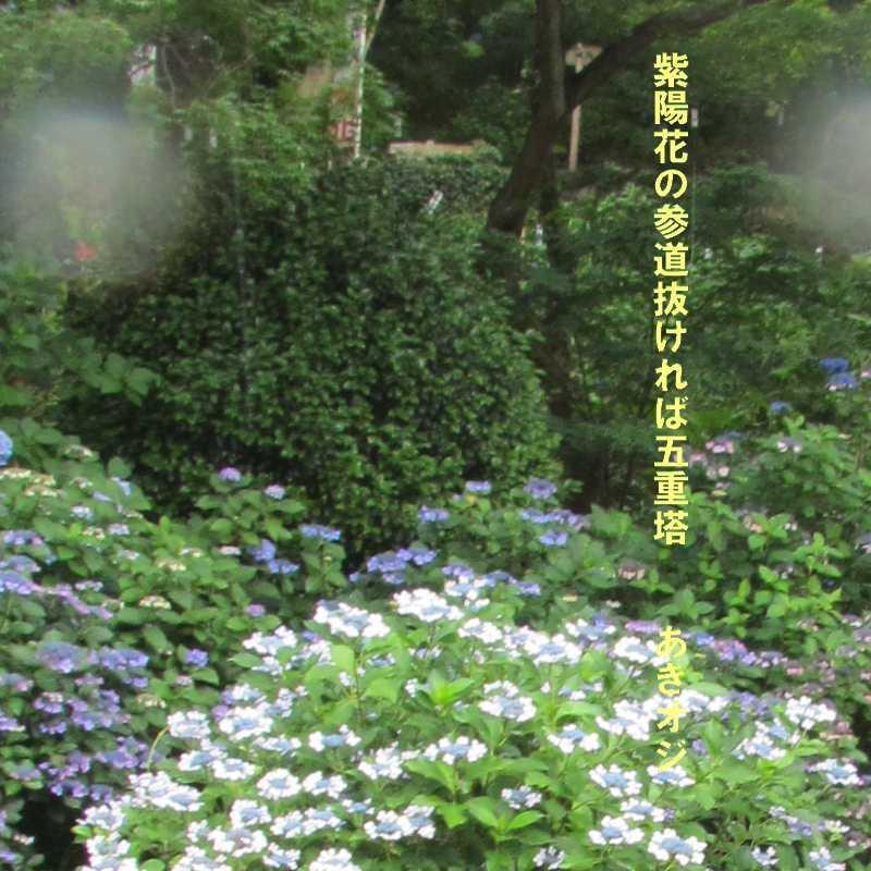 f0117041_14595875.jpg