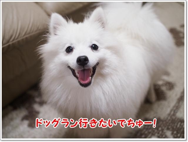 d0013149_00430200.jpg
