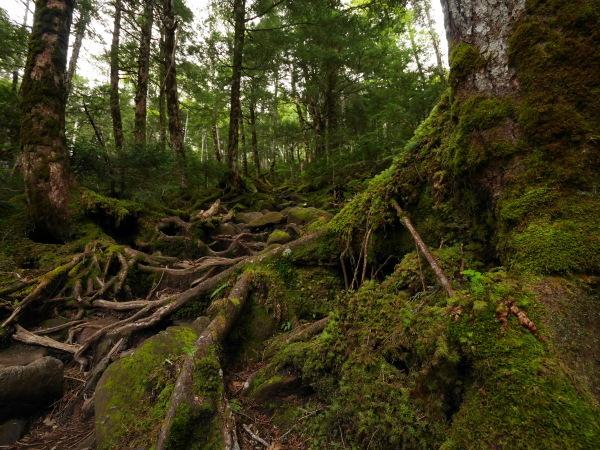 梅雨の苔の森_a0351368_08531345.jpg
