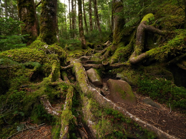 梅雨の苔の森_a0351368_08532108.jpg