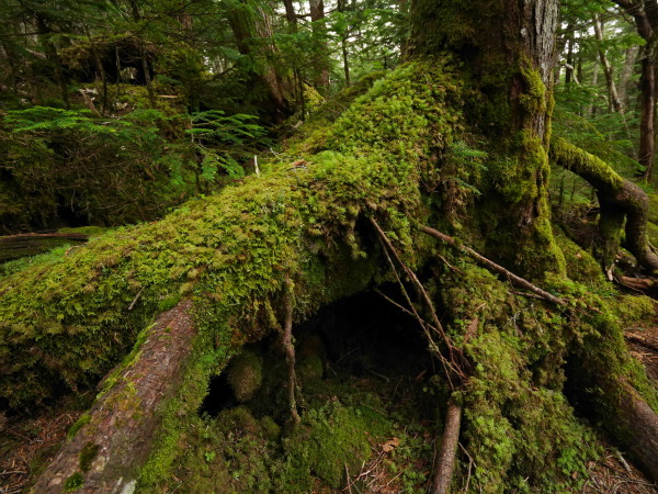 梅雨の苔の森_a0351368_08533128.jpg