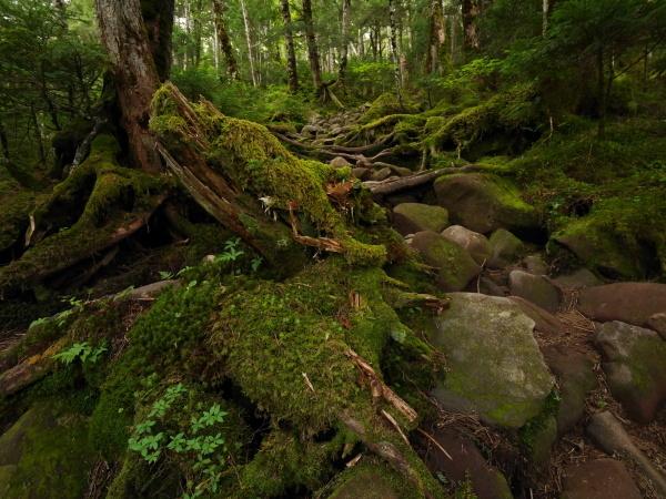 梅雨の苔の森_a0351368_08533724.jpg