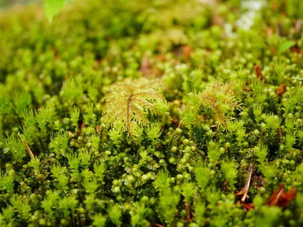 梅雨の苔の森_a0351368_08580607.jpg