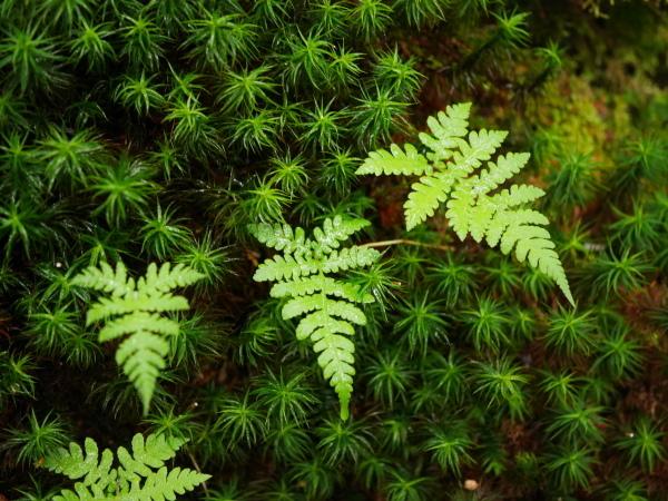 梅雨の苔の森_a0351368_08581272.jpg