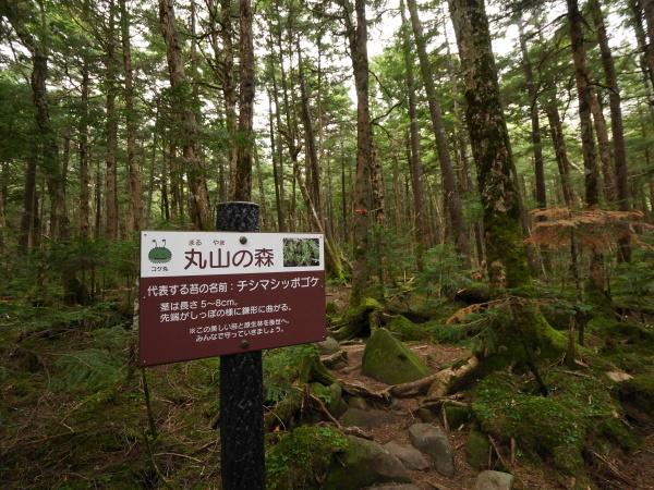 梅雨の苔の森_a0351368_22433864.jpg