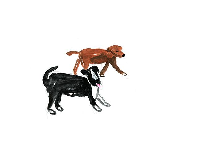 dog dog_c0154575_21430284.jpg