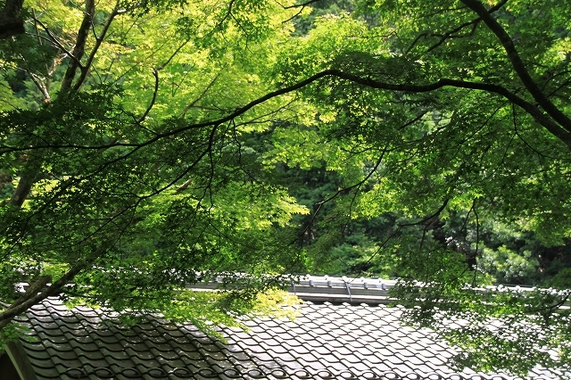 京都大原寂光院_f0374092_21580282.jpg