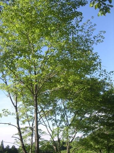 採水地は晴れでした。緑、風、鳥のこえ。_e0295926_13132958.jpg