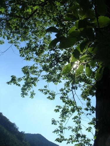 採水地は晴れでした。緑、風、鳥のこえ。_e0295926_13134626.jpg