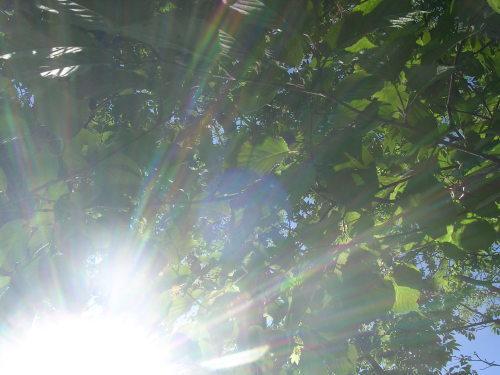 採水地は晴れでした。緑、風、鳥のこえ。_e0295926_13141965.jpg