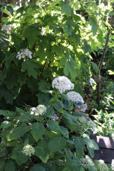 今朝の庭_b0132338_07291078.jpeg