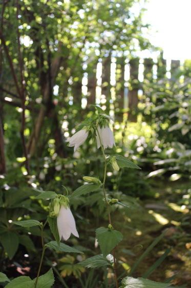 今朝の庭_b0132338_07292078.jpeg