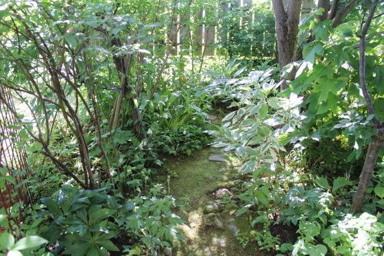 今朝の庭_b0132338_07304369.jpeg