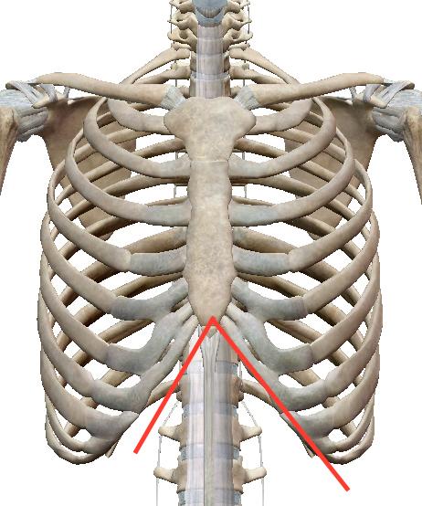 疲れが抜けないときには肋骨「◯の字」を整えます 〜ある日の施術より〜_e0073240_10064908.jpg