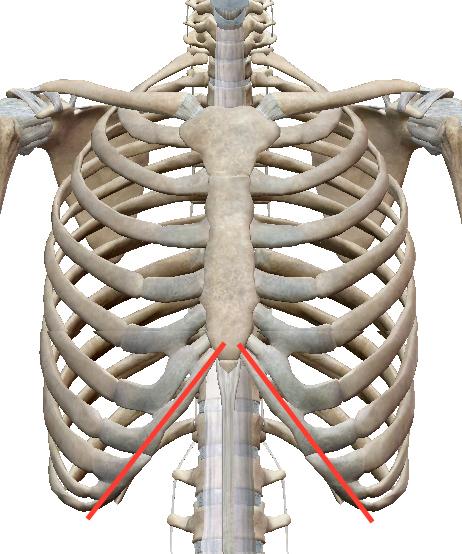 疲れが抜けないときには肋骨「◯の字」を整えます 〜ある日の施術より〜_e0073240_10065941.jpg