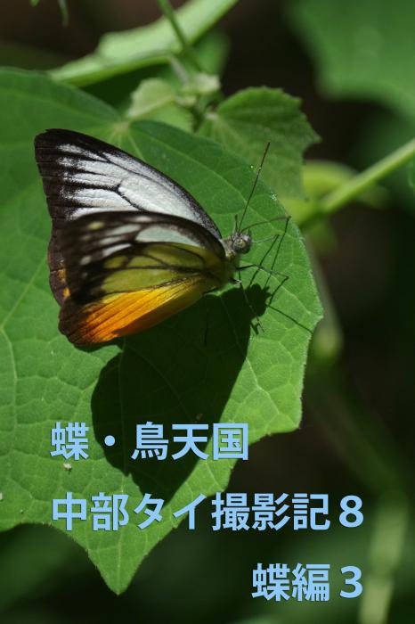 b0144049_16053695.jpg