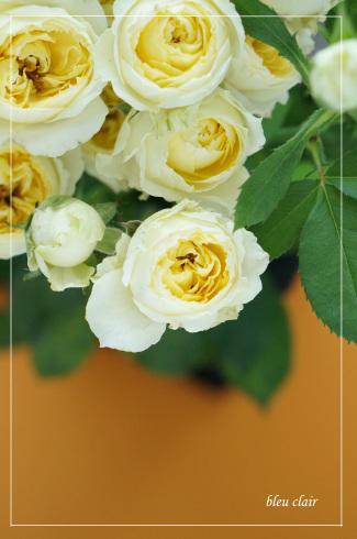 ロゼッタ咲きのスプレーバラ_b0270372_17554079.jpg