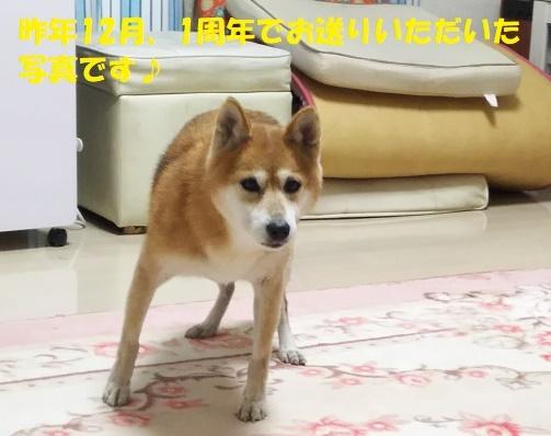 f0121712_15420408.jpg
