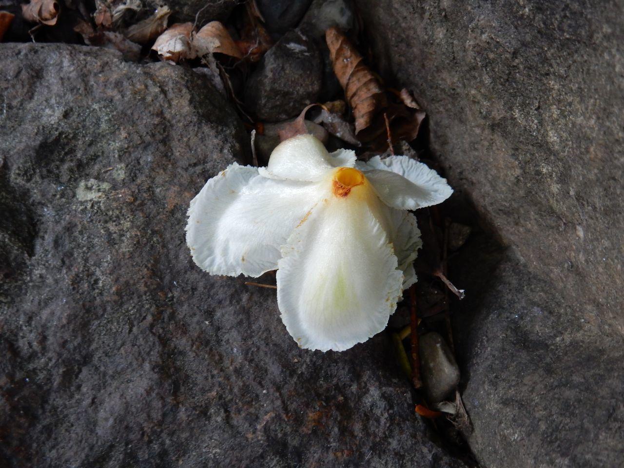 太陽のない夏日に白い花_c0025115_20594014.jpg