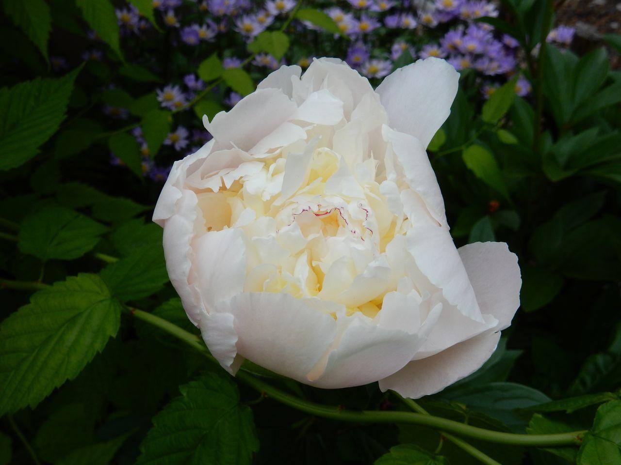 太陽のない夏日に白い花_c0025115_21113254.jpg