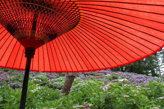 太閤山ランドの紫陽花_b0132338_16205280.jpeg