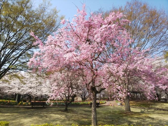 プチポワン・サンクは、32年目の春を迎えます!_c0054646_16225051.jpg