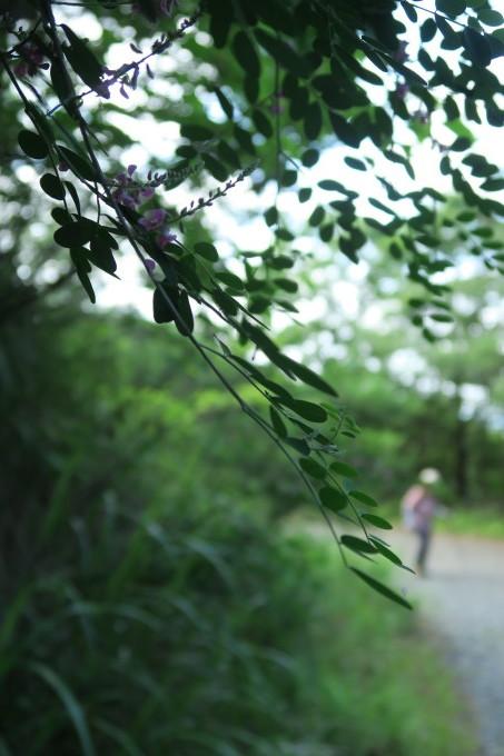 ひとり山歩き・・・コアジサイのあと_e0348754_13570734.jpg