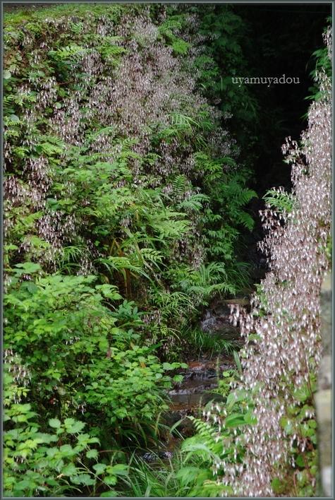 森の線香花火_a0157263_21204987.jpg
