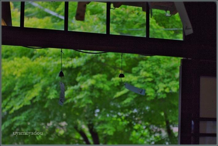 森の線香花火_a0157263_21314521.jpg