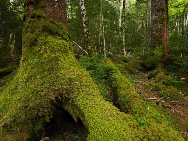 北八ヶ岳 苔の森 _a0351368_10420655.jpg