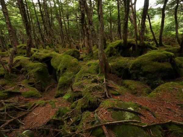 北八ヶ岳 苔の森 _a0351368_10424504.jpg