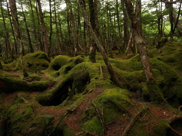 北八ヶ岳 苔の森 _a0351368_10424749.jpg