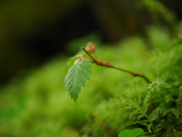 雨の日には苔の観察_a0351368_13550378.jpg