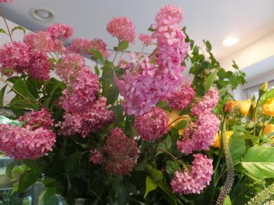 オークリーフ(ピンクのアナベル紫陽花)_f0049672_11460226.jpg