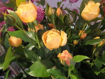 オークリーフ(ピンクのアナベル紫陽花)_f0049672_12060074.jpg